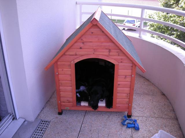 niche pour grand chien animaux loisirs bordeaux 33800 annonce gratuite animaux. Black Bedroom Furniture Sets. Home Design Ideas