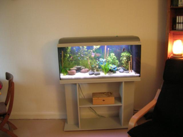 aquarium 100 cm de facade meuble animaux loisirs bordeaux 33800 annonce gratuite animaux. Black Bedroom Furniture Sets. Home Design Ideas