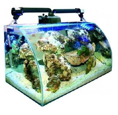 aquarium eau de mer 40 l animaux loisirs meudon 92360 annonce gratuite animaux. Black Bedroom Furniture Sets. Home Design Ideas
