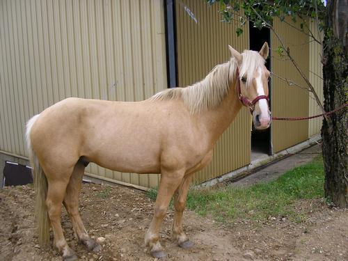 cheval a vendre animaux loisirs saint sylvestre 07440 annonce gratuite animaux. Black Bedroom Furniture Sets. Home Design Ideas