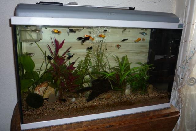 Aquarium aquadisio meuble assorti animaux loisirs for Meuble 80x30
