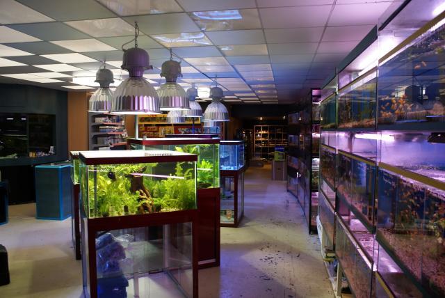 magasin sp cialis en aquariophilie proche de paris. Black Bedroom Furniture Sets. Home Design Ideas